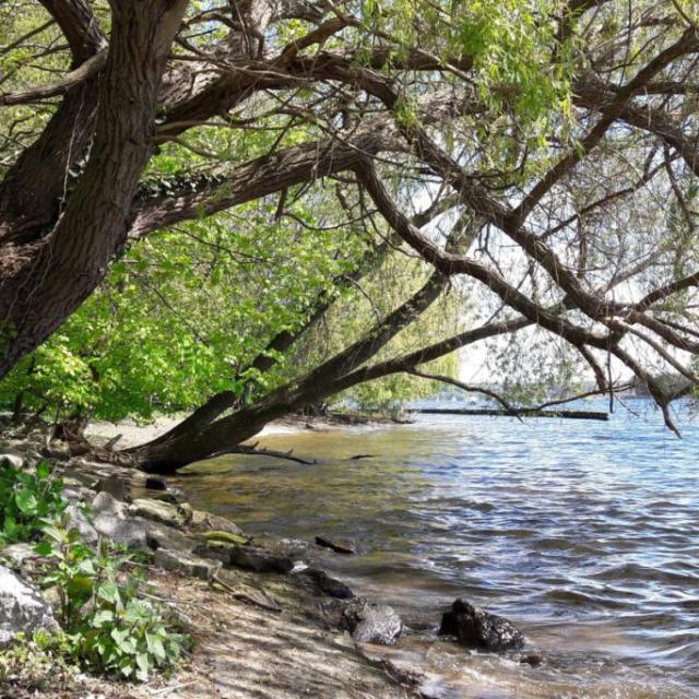 Ufer an Kälberwerder