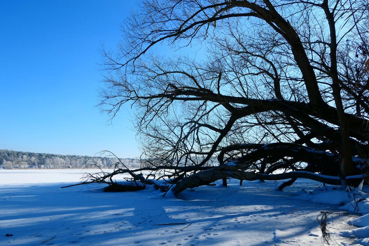 Winterliches Ufer