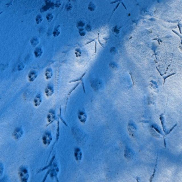 Tierspuren auf der verschneiten Wasseroberfläche